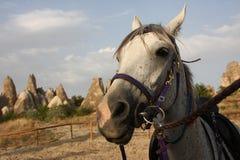 Cappadocia koń Fotografia Royalty Free