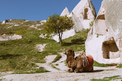 Cappadocia-Landschaft mit Felsen und Kamel Stockbilder