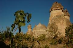 cappadocia pasabagi Zdjęcie Royalty Free