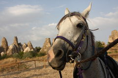Cappadocia-Pferd Lizenzfreie Stockfotografie