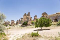 Cappadocia, Turchia Funghi di pietra della radura nella valle dei monaci (valle Pashabag) Fotografia Stock