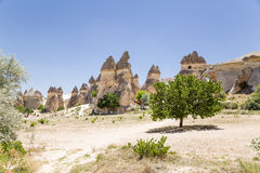 Cappadocia, Turkey. Glade stone mushrooms in the Valley of the Monks (Valley Pashabag) Stock Photography