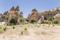 Cappadocia, Turkey. Multihead stone mushrooms in the Valley of the Monks (Valley Pashabag) Stock Images