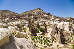 Cappadocia, Turkey. Picturesque rocks in the Valley of Monks (Valley Pashabag) Royalty Free Stock Image