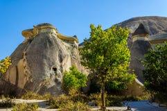 Cappadocia, Turquia Chaminé feericamente Multihead apedreja cogumelos no vale das monges Vale de Pasabag Imagens de Stock Royalty Free