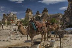 Cappadocia, wielbłąd, indyk, krajobraz, natura, podróż Obrazy Stock