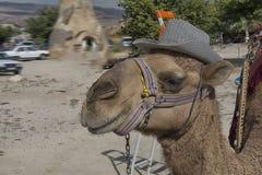 Cappadocia, wielbłąd, indyk, krajobraz, natura, podróż Obrazy Royalty Free