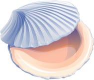 Cappasanta americana Shell ostrica realistico illustrazione di stock