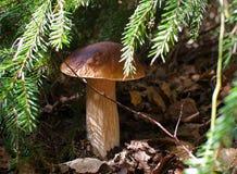 capped mushroom 免版税库存图片