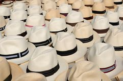 Cappelli di Panama Fotografie Stock Libere da Diritti
