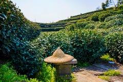 Cappello degli agricoltori di tè con i campi del tè Immagine Stock