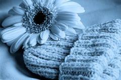 Cappello del bambino blu con il fiore Fotografia Stock