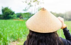 Cappello di bambù asiatico della pioggia di usura di donna che cammina nel giacimento dell'anguria Immagini Stock Libere da Diritti