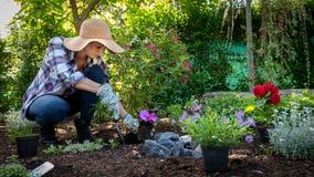 Cappello di paglia d'uso del bello giardiniere femminile che pianta i fiori nel suo giardino Concetto di giardinaggio immagine stock libera da diritti