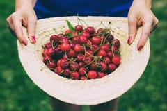 Cappello di paglia in pieno delle ciliegie di recente selezionate Immagine Stock