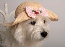 Cappello di Pasqua Fotografia Stock Libera da Diritti