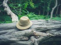 Cappello di safari sull'albero caduto nella foresta Immagine Stock