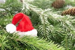 Cappello di Santa Claus sui rami dell'albero di Natale Fotografie Stock Libere da Diritti