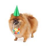 Cappello e presente del partito di Pomeranian Fotografie Stock