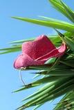 Cappello sulla palma Fotografie Stock