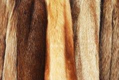 Cappotti di pelliccia fotografia stock libera da diritti