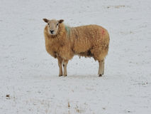 Cappotto di inverno Immagine Stock Libera da Diritti