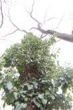Cappotto naturale Fotografie Stock