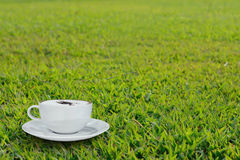 Cappuccino coffee on green grass in morning time Stock Images