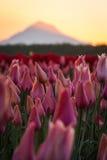 Cappuccio del supporto dal tulipano lontano Immagine Stock Libera da Diritti
