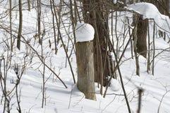 Cappuccio della neve su un ceppo nella foresta immagine stock