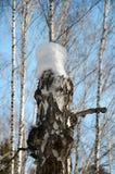 Cappuccio della neve sul ceppo Immagine Stock