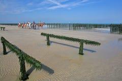 CAPPUCCIO GRIS NEZ, FRANCIA - 27 AGOSTO 2017: Cozze coltivate sui bouchots dei pali sul cappuccio vicino Gris Nez della spiaggia  Fotografie Stock Libere da Diritti