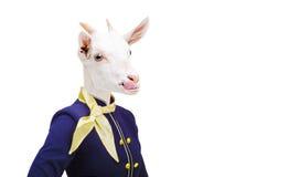 Capra del ritratto che mostra lingua nell'hostess del costume Immagine Stock