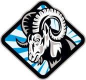 Capra delle pecore della ram del Bighorn Fotografie Stock Libere da Diritti