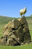 Capra di angora sulla roccia Fotografie Stock