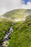 Capra strumień w FăgăraÈ™ górach Obraz Stock