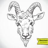 Capra - un ritratto - un disegno di vettore Illustrazione di Stock