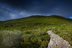 Capraia Island, Arcipelago Toscano National Park, Tuscany, Italy. Trekking trail to the tower of Zenobito and Calarossa among arbutus trees, asfodelie flowers Stock Photos