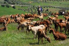 Capraio, Andalusia, Spagna. Fotografie Stock Libere da Diritti