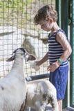 Capre d'alimentazione dell'agricoltore del ragazzo Fotografie Stock Libere da Diritti
