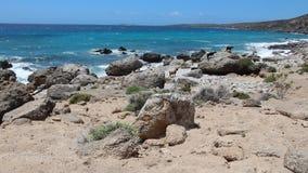 Capre di Creta video d archivio