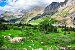 Capre di montagna Fotografia Stock Libera da Diritti