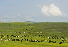 Capre e bestiame che pascono nella steppa mongola Fotografia Stock Libera da Diritti