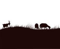 Capre e pecore sul prato Immagine Stock
