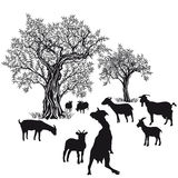 Capre ed alberi Immagini Stock