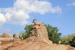 Capre sulle rocce Fotografia Stock Libera da Diritti