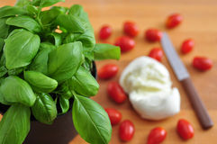 Caprese salad ingredients Royalty Free Stock Image