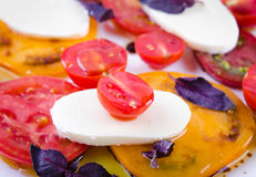 Caprese salad with tomatoes, mozzarella and basil. Royalty Free Stock Images