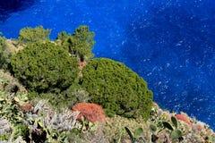 Capri-eiland: mediterrane vegetatie royalty-vrije stock foto