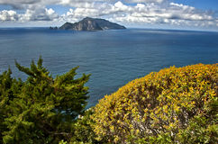 Capri Island on the horizon. Island Capri visible on the horizon and blossoming plants foreground Royalty Free Stock Photography